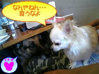大型犬と・・・