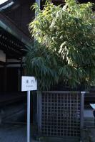 kyoto 151