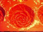 rose-molf.jpg