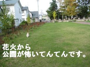 201010画像 030