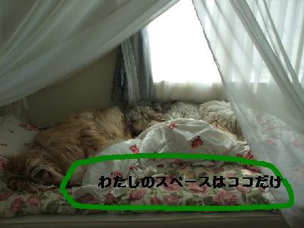 2008_07220103.jpg