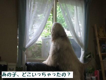 2008_08270003.jpg