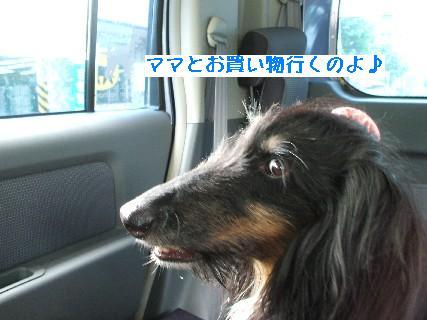 2008_09190001.jpg