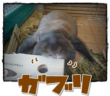 2009-05945.jpg
