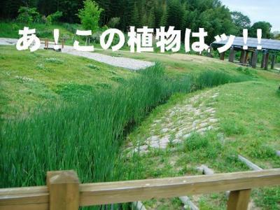 2008050606.jpg