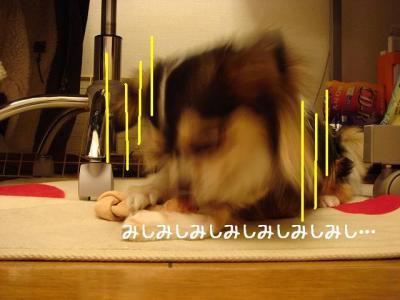 2008051005.jpg