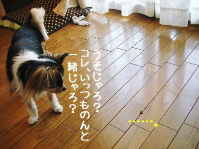 2008051506.jpg