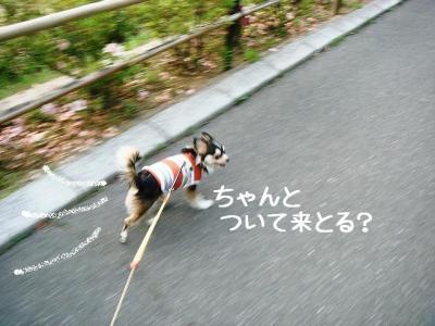 2008051703.jpg