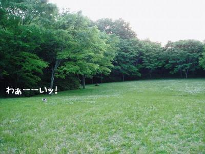 2008051706.jpg