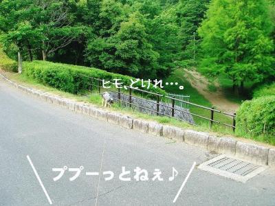 2008052204.jpg