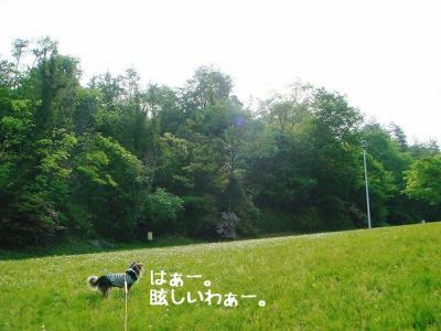 2008052205.jpg