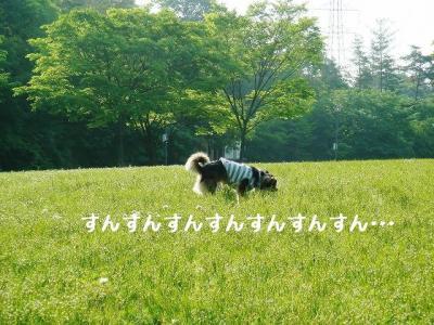 20080529002.jpg