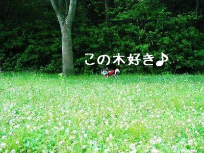 2008060503.jpg