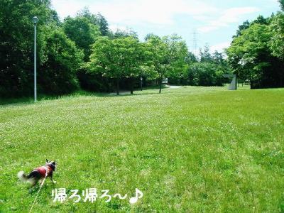 2008060510.jpg