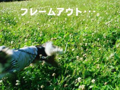 2008061305.jpg