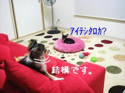 2008070104.jpg