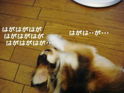 2008071505.jpg