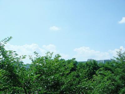 2008072001.jpg