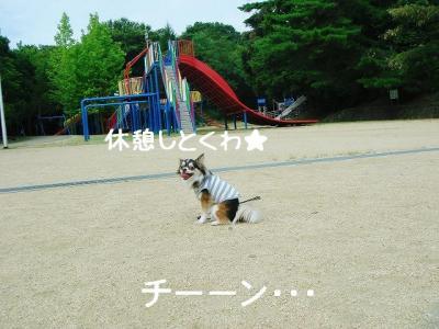 2008080903.jpg