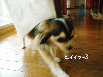 2008082903.jpg