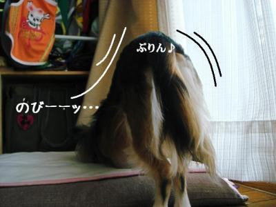 2008091401.jpg