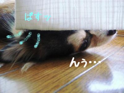 2008091704.jpg