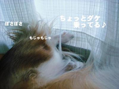 2008091705.jpg