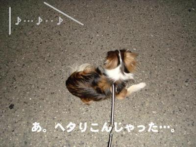 2008091902.jpg