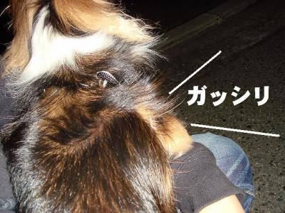2008091906.jpg