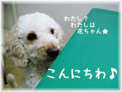 2008101105.jpg