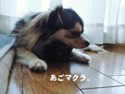 2008101305.jpg