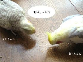 05_12-15_01a.jpg