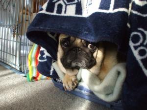 かけふのベッド