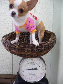 体重です…か?