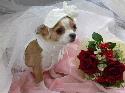 花嫁さん。