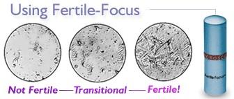 fertilefocus.jpg