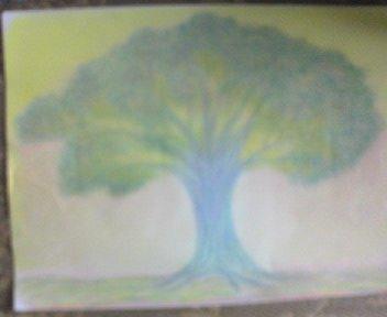 桜の木2006、4、22