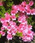 庭の花4・30