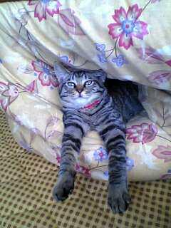 スッポン猫