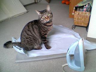 アイロン猫