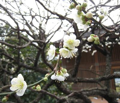 鎌倉ー長谷寺