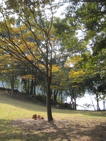 公淵森林公園