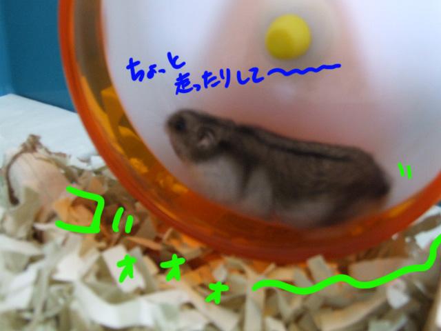 DSCF081104c4986.jpg