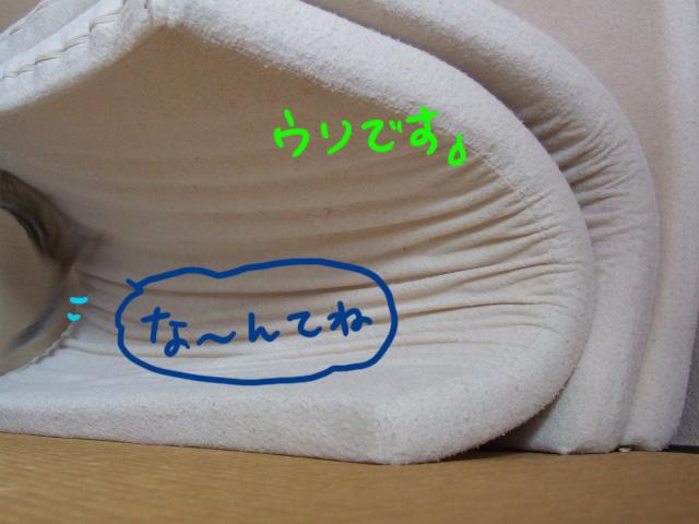 DSCF081106h0381.jpg