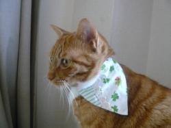 看板猫、虎侍は緑を着用