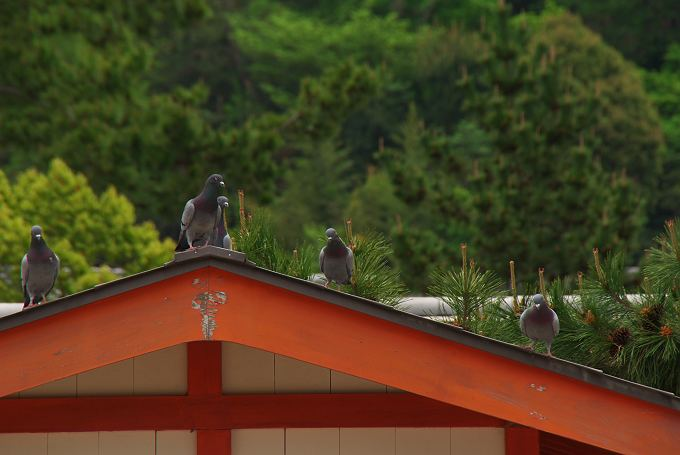 厳島神社で見た風景