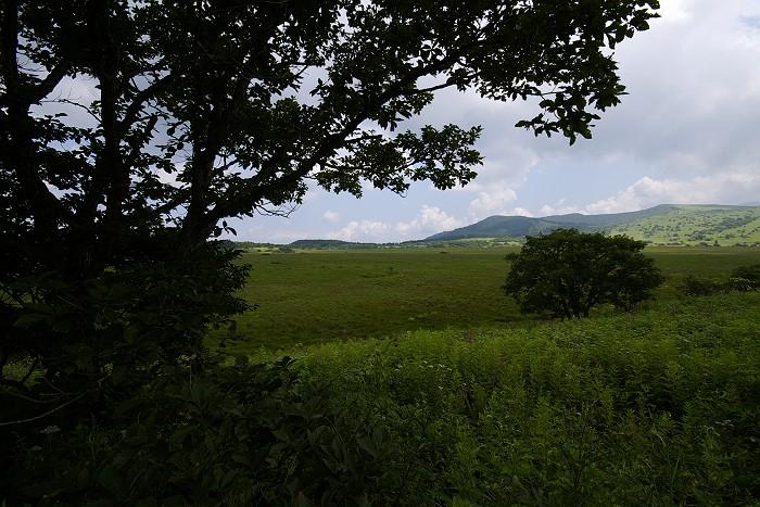 八島ヶ原湿原 2
