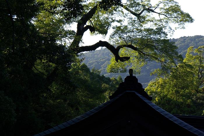 伊勢神宮内宮の秋 其の弐