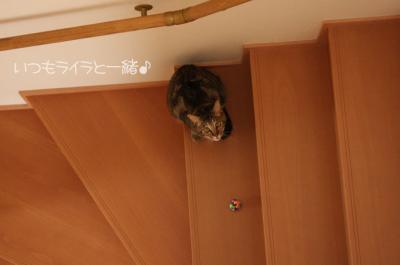 サラサ、見上げる