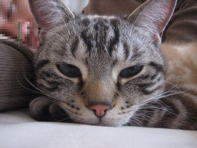 寝てるのに~